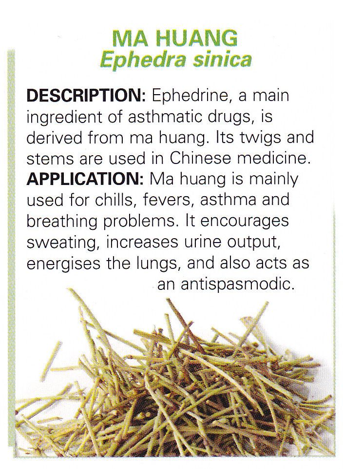 Chinese herbs - MA HUANG - Ephedra sinica