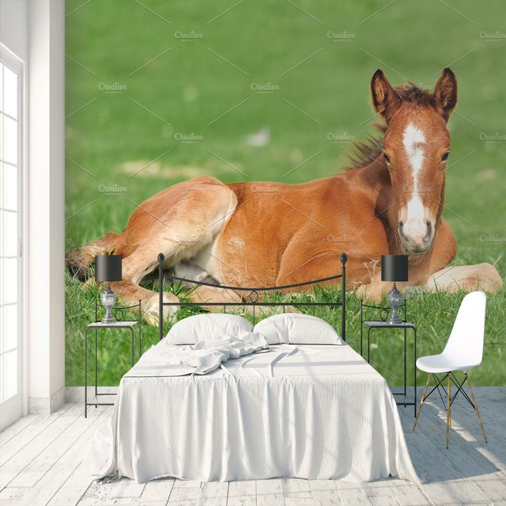 Fotobehang veulen maak het jezelf eenvoudig en bestel fotobehang voorzien van een lijmlaag bij - Kamer paard meisje ...