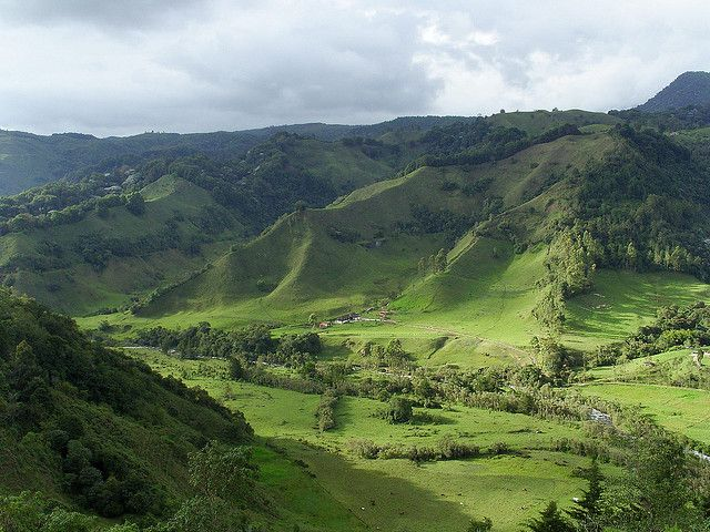 """Colombia. Valle del Cocora (Salento) a part of the Los Nevados Nat. Natural Park, 580km2,  located in the Central Cordillera of the Andean mountains. """"Cocora"""" was the name of a Quimbayan princess, daughter of the local chief Acaime, it means """"star of water"""" It is the principal location of the national tree and symbol of Colombia, the Quindío wax palm (Ceroxylon quindiuense), as well. (text by aliXeMona, source Wikipedia)"""
