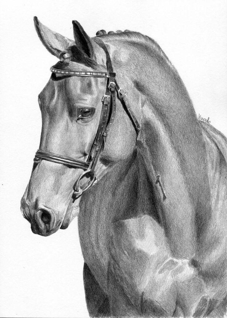 Rysunek olowkiem portret konia