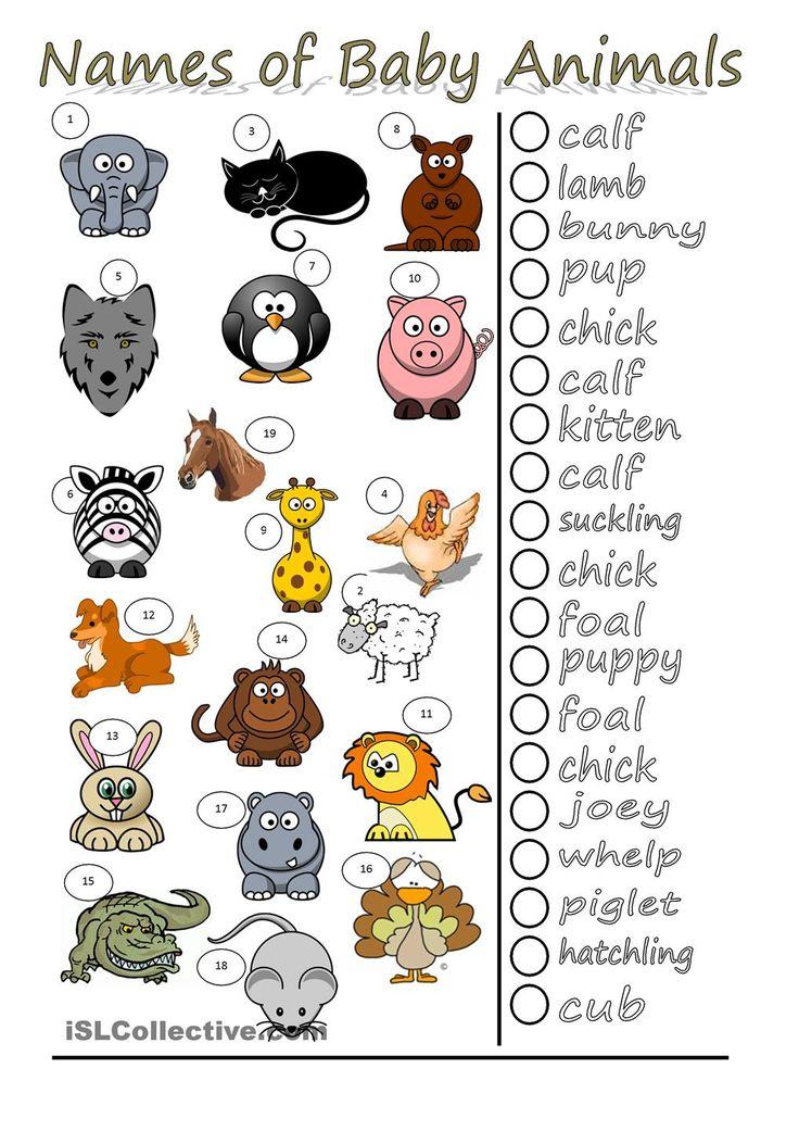 Names of Baby Animals | At Home | Educacion ingles ... - photo#16