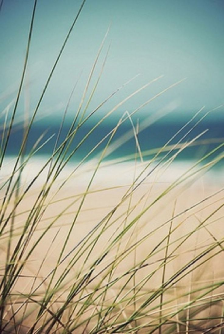 Ethereal landscapes nature photography by donna geissler - Grasses