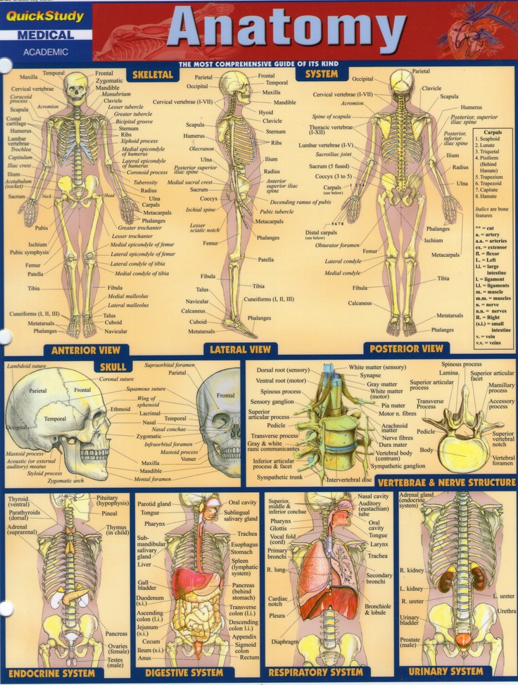 7 best anatomy& physiology 2 images on Pinterest | Animal anatomy ...