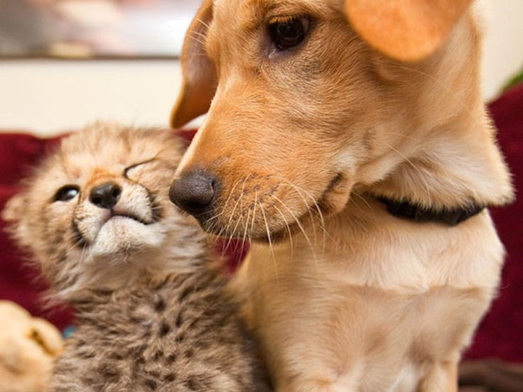 15 Unusual Animal Friendships That Will Melt Your Heart