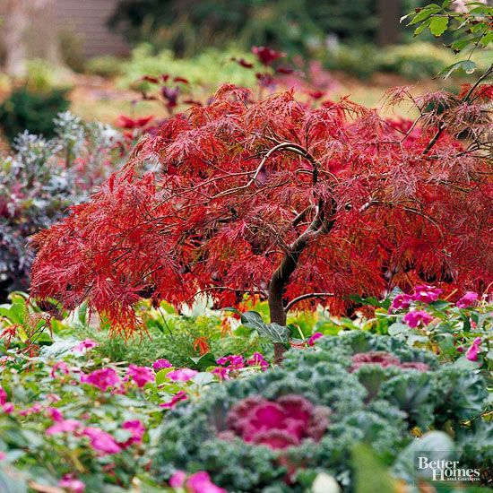 Japanese maple trees add grace and beauty through the seasons.