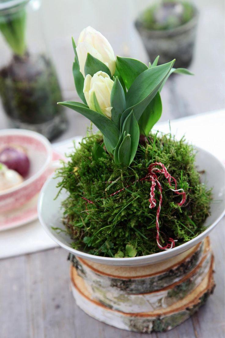 die besten 25 bl hende pflanzen ideen auf pinterest bl hende pflanzen mehrj hrige pflanze. Black Bedroom Furniture Sets. Home Design Ideas