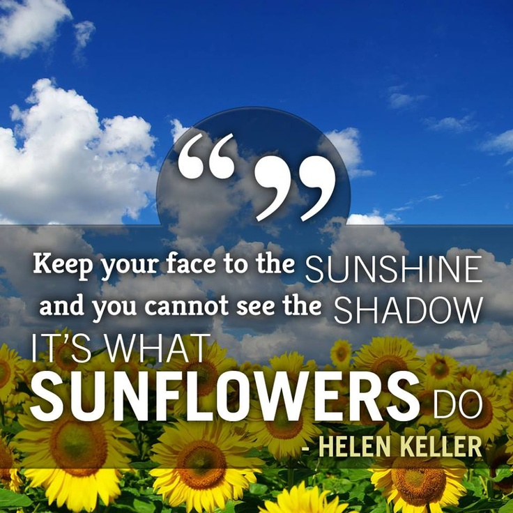 Sunflowers! #quotes #gardenquotes #flowers #gardening ...