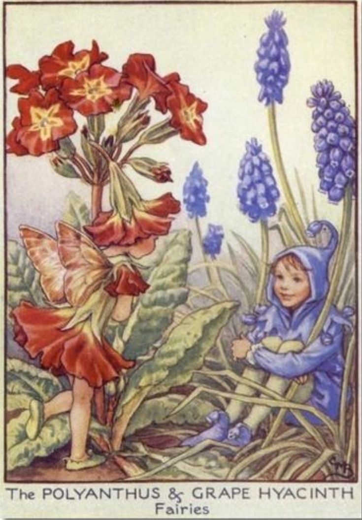 madame merle on twitter in 2020  flower fairies fairy