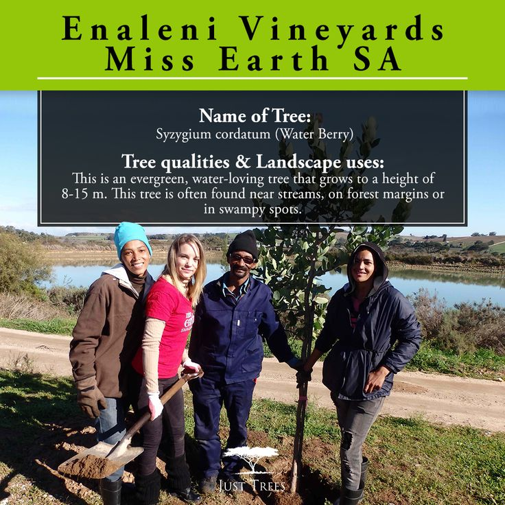 """It's #ThrowbackThursday time and we're remembering when we donated 6 x 40L Syzygium cordatum """"Water Berry"""" trees to a few of the Miss Earth SA finalists to plant at Enaleni Vineyards."""