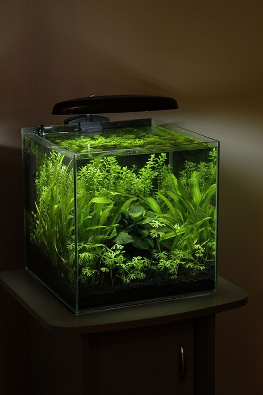 Aquascaping Small Reptiles in 2020 | Betta fish tank ...