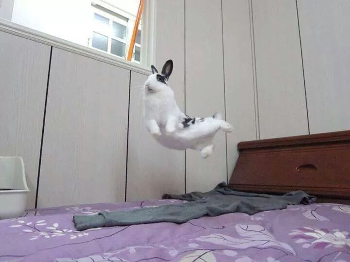 Awesome Bunnies ♥ : Photo