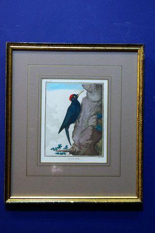 Antieke vogelprent van zwarte specht, Hulk, Buffon 19662 op www.lansantiek.com