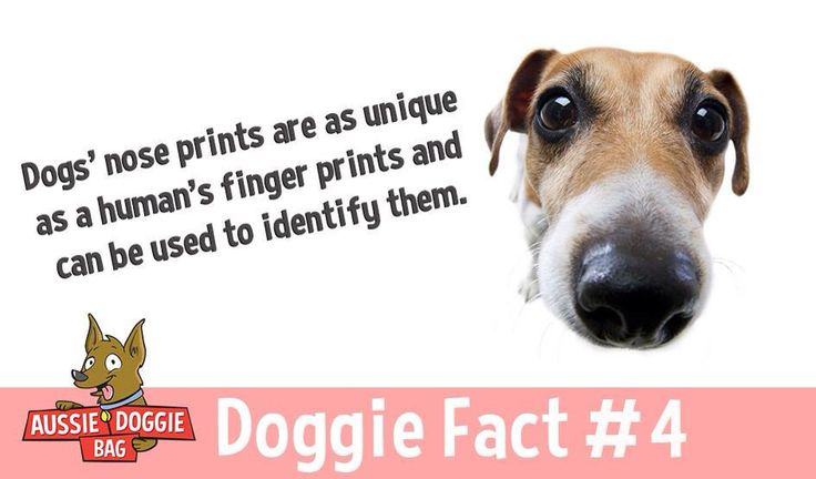 Doggie Fact about Dogs Noses