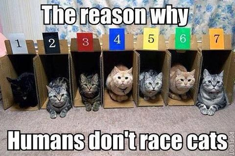 Cat races ...  Feel like you're Under The Paw too? Why not come and join our page!