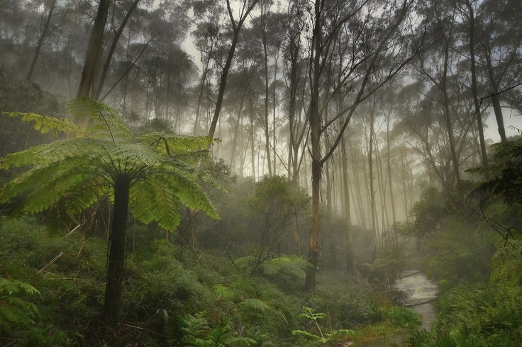 Luera in the Blue Mountains West of Sydney NSW Australia