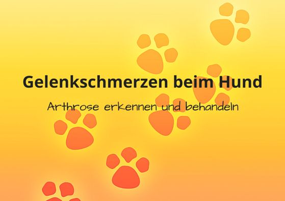 #Gelenkschmerzen beim #Hund, was hilft? #Arthrose erkennen und behandeln