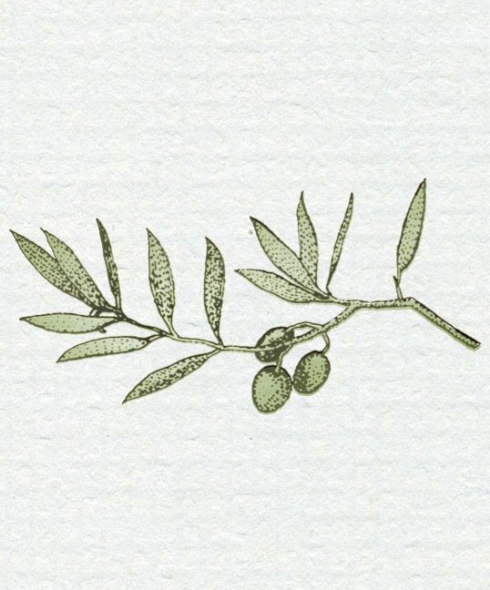 olive branch illustration - Google Search