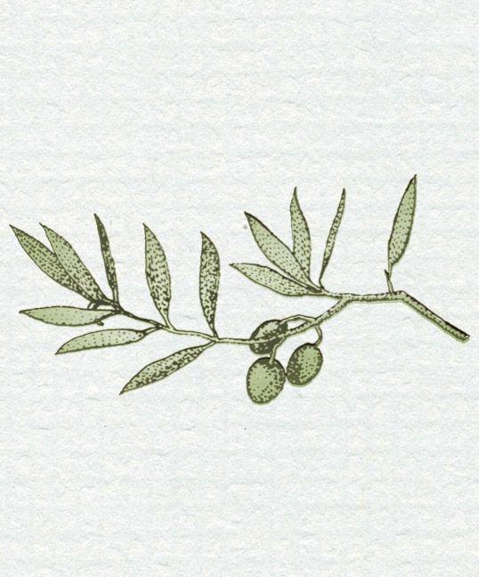 Les branches d'olivier représentent la beauté intérieure. Les feuilles sont ternes; la branche, inutile et dure. Mais lorsqu'on la cultive et qu'on la connait, on y découvre ses vertus (son fruit et son bois). C'est également un symbole de pardon, de paix, de victoire, de fidélité et d'éternité.