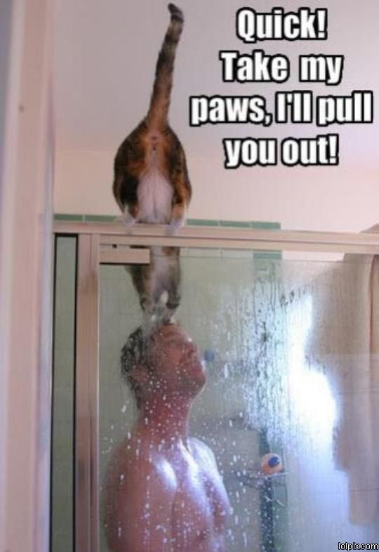 """My husband's cat once sat on the edge of the tub while I was showering and yowled at me like, """"What are you doing?!  It's wet in there!!"""""""