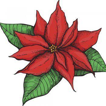 Leyenda corta de origen mexicano para contar a los niños en Navidad. Leyenda sobre el origen de la Flor de Pascua o Flor de Navidad. Cuentos cortos para la Navidad.