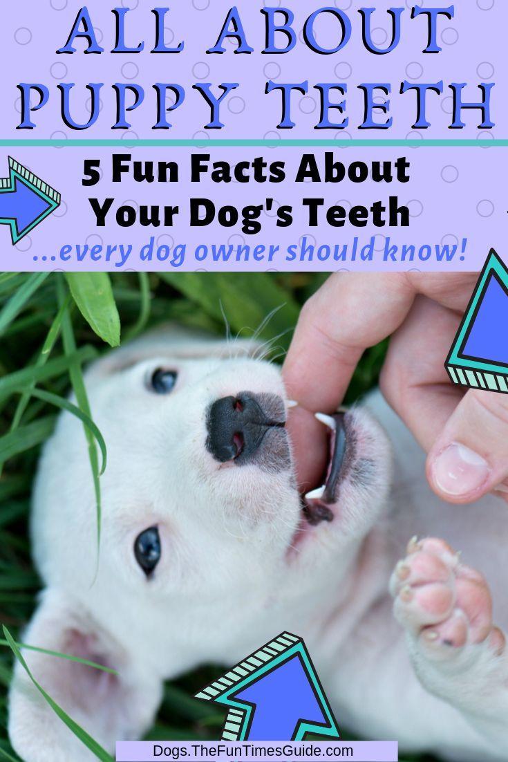 Pin On Dog Home Remedies Dog Safe Meds Alternative Meds