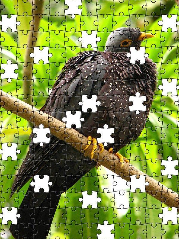 Free Jigsaw Puzzle Online - Bird