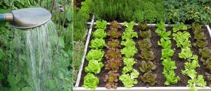 groenten water geven in de vierkantemeter tuin
