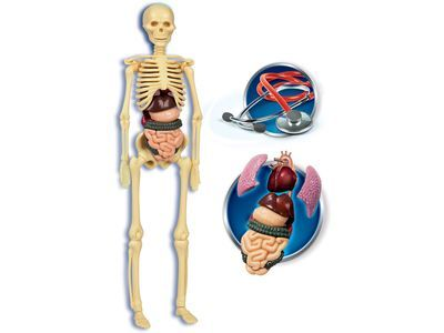 Ciało ludzkie Clementoni