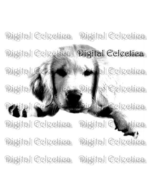 Golden+Retriever+Puppy.+Puppy+Prints.+Puppy+by+DigitalEclectica,+$2.99