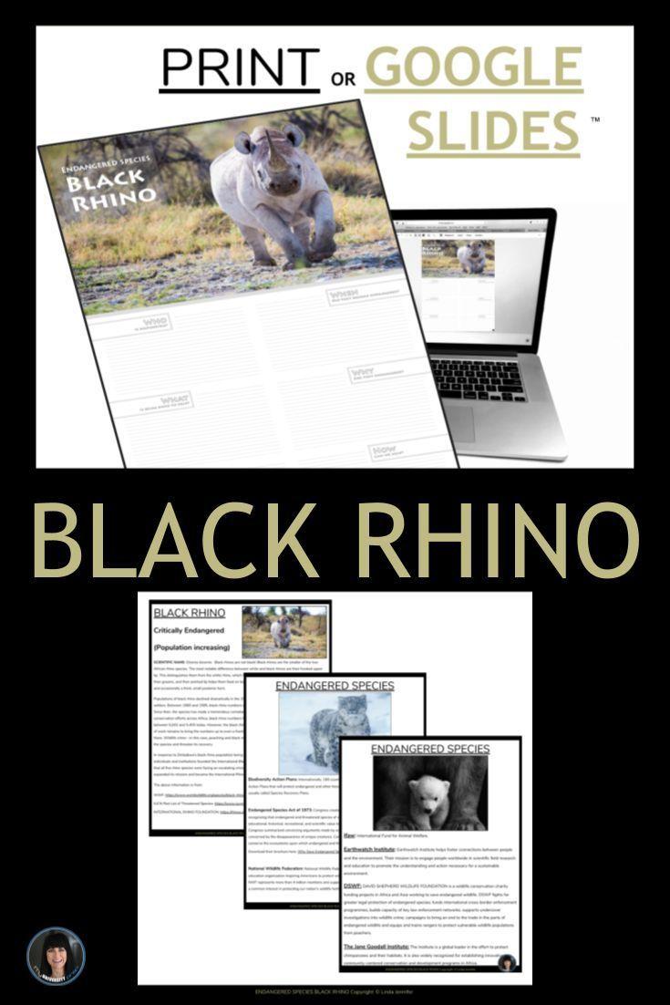 Endangered Species Activities Black Rhino Google Slides Infographic Interactive Or Print Infograp Endangered Species Activities Endangered Species Endangered