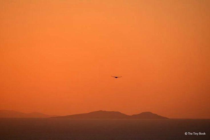 Sunsets in Thira, capital of Santorini.Santorini dreamy photo destination