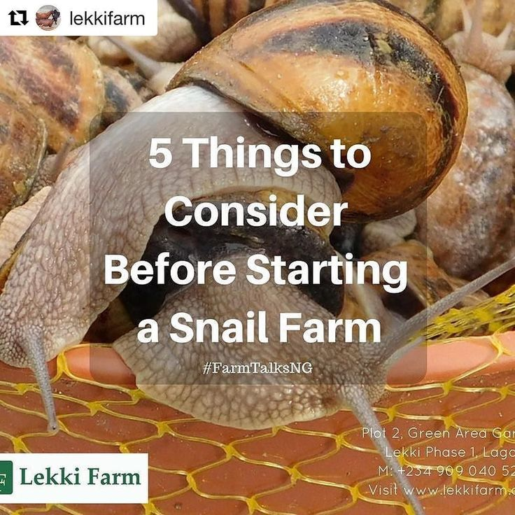 how to start a snail farm in usa
