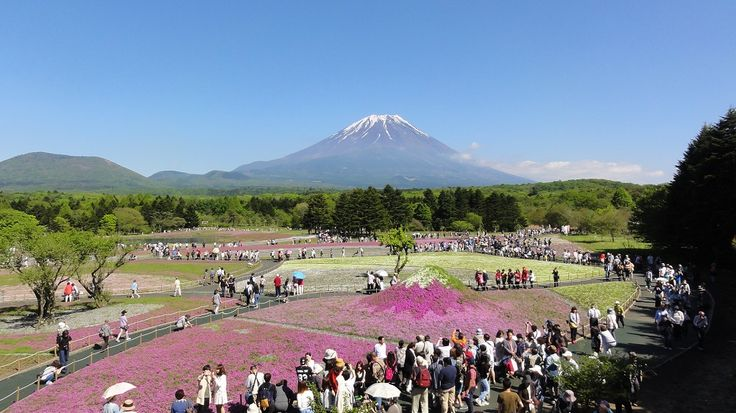 Fuji Five Lake in Yamanashi Japan(Fuji Shibazakura Festival)