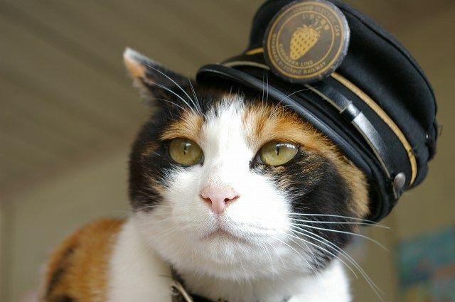 たま駅長、お疲れ様でした。 どうぞ安らかに眠って下さい。