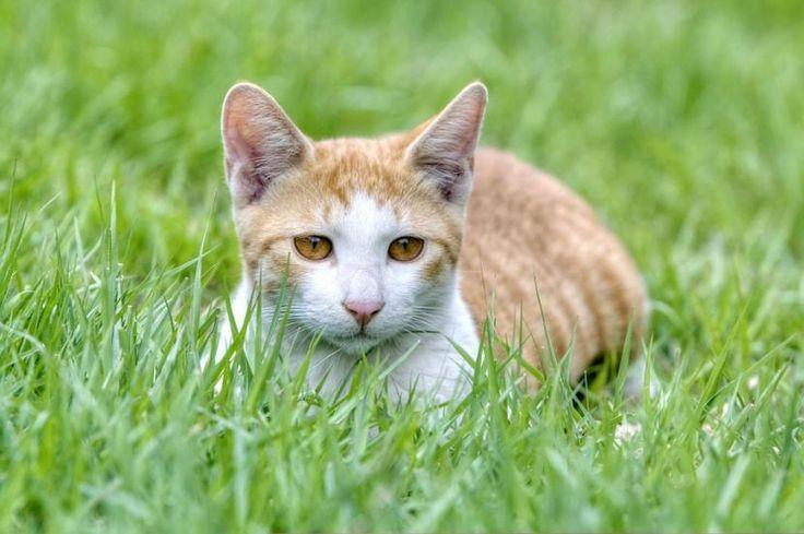 Cómo hacer repelente de gatos - http://www.notigatos.es/como-hacer-repelente-de-gatos/ #gatos