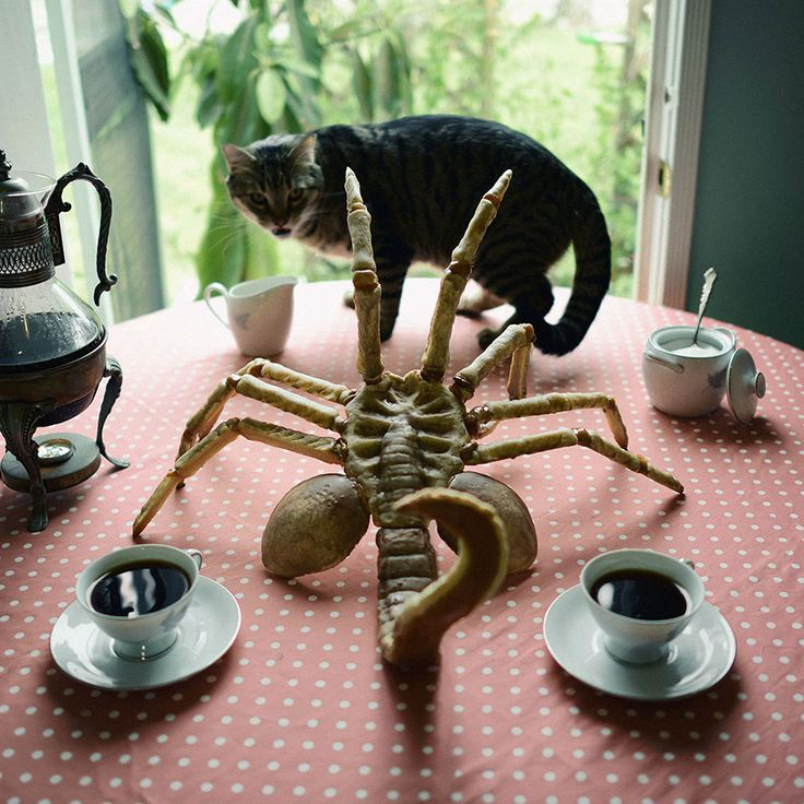 Christine McConnell creates terrifying baked goods.  This face hugger is DISGUSTING.