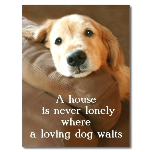 """This postcard features a photograph of a cute golden #retriever dog who is looking up lovingly from his resting place on a couch. The text reads, """"A house is never lonely where a loving dog waits."""""""