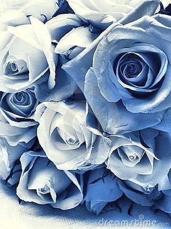 Lovely blue & white roses