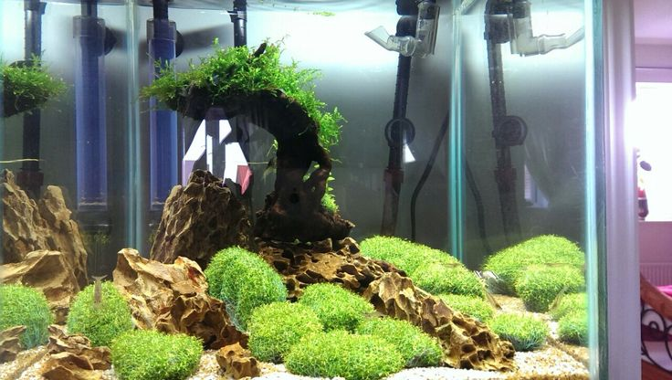 Aquascape for my friend