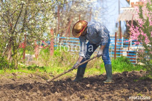 """Download the royalty-free photo """"Man hoeing vegetable garden soil"""" created by Bits and Splits at the lowest price on Fotolia.com. Browse our cheap image bank online to find the perfect stock photo for your marketing projects!"""