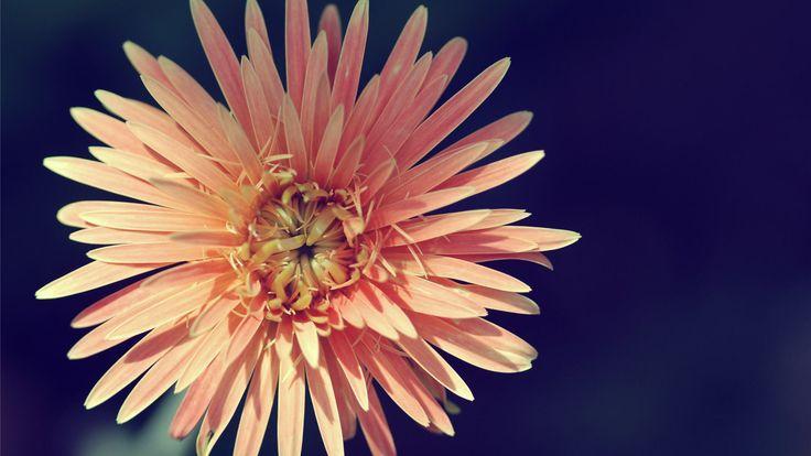 Download Vintage Flower Backgrounds HD Wallpaper