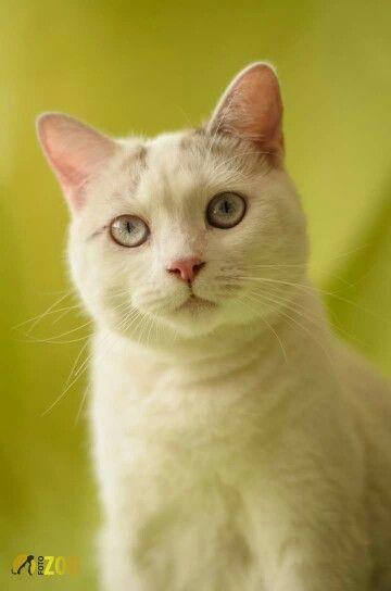 Ella es Simona, una hermosa gatita la la cual participo de una sesión fotográfica con nosotros. Contactos 3172731938
