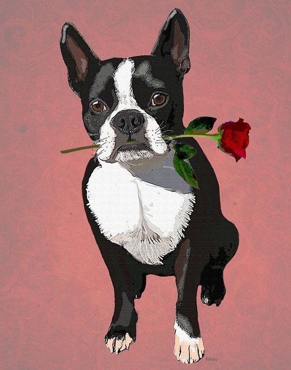 Boston Terrier 8X10 Rose in Mouth Art Print Digital Illustration Original Painting Dog picture Wall Decor Wall hanging Wall Art frenchie.  via Etsy.