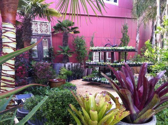 Jardins Violetas