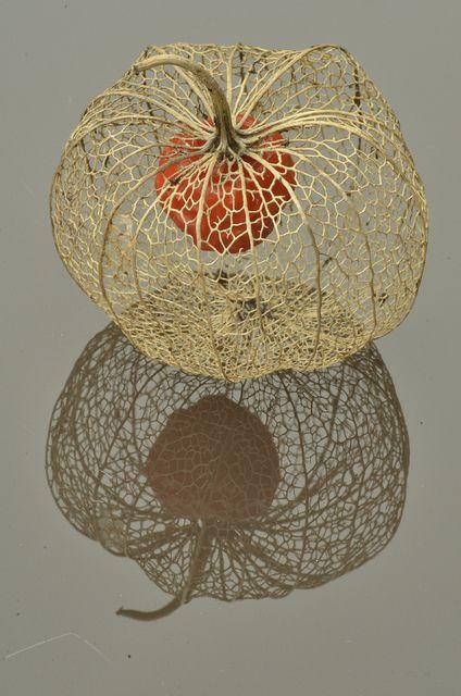 Chinese Lantern seed pod macro's