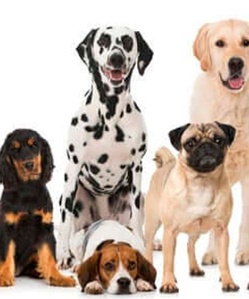 Hundeverbände