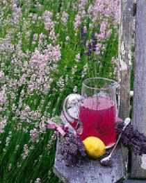* Lavender Tea  Use 4 teaspoons of fresh Lavender or 1 Tbsp. dried. Place in a mug & pour 1/4 cup of boiling water over the Lavender. Use a saucer as a lid & steep 5 minutes. Stain & measure tea as a flavour booster, drink remainder as you wait for cookies!  Can substitute 1 Tbsp. Lemon juice or 1 tsp. vanilla extract