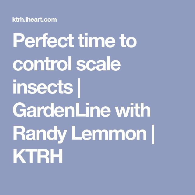 Perfect time to control scale insects | GardenLine with Randy Lemmon | KTRH