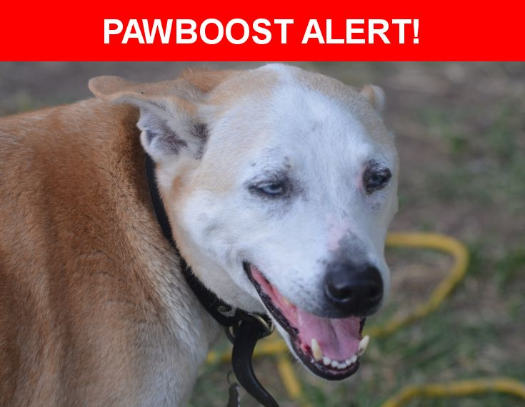 Please spread the word! Bo was last seen in Marysville, CA 95901.    Nearest Address: Near Waterfall Drive, Marysville, CA, United States