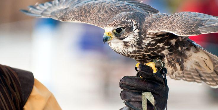 Fotokurs mit Falken Kaiserslautern #Tiere #Vögel #Natur